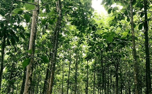 Teakhout tuinmeubelen |BuitenHof Tuinmeubelen